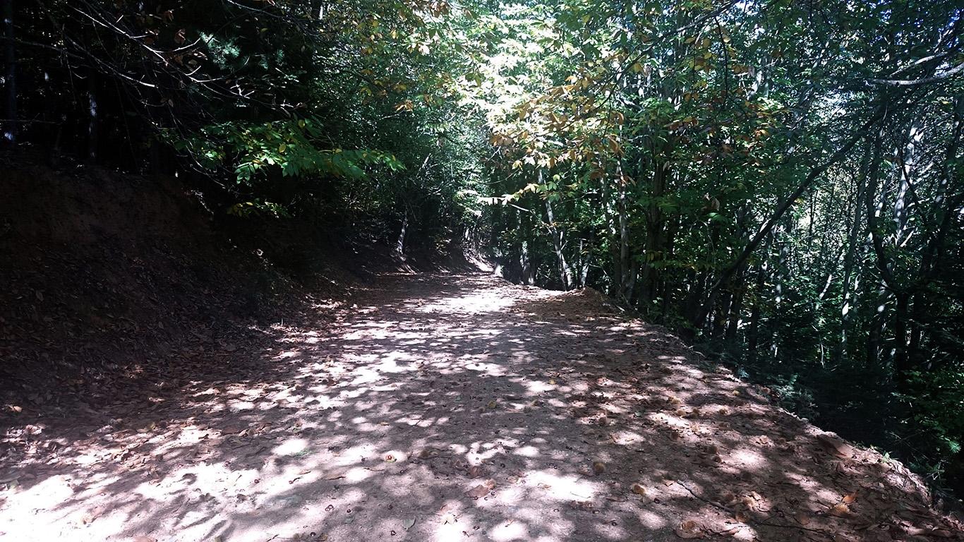 Το μονοπάτι του Καστανόδασους στο Γεωργίτσι Λακωνίας